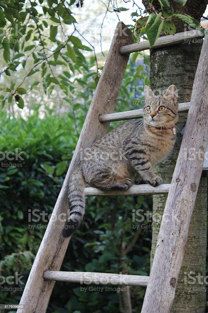 Cat, kitten stock photo