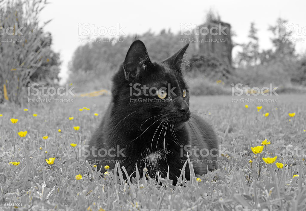 Cat laying in the grass stock photo