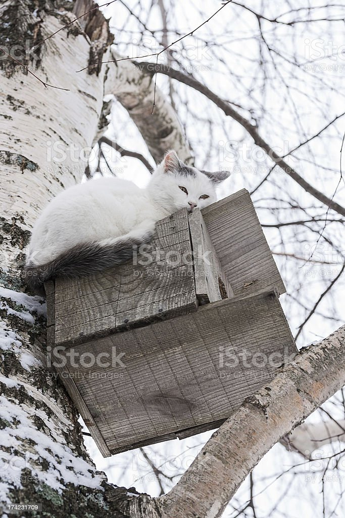 Cat laying on top of a birdhouse royalty-free stock photo