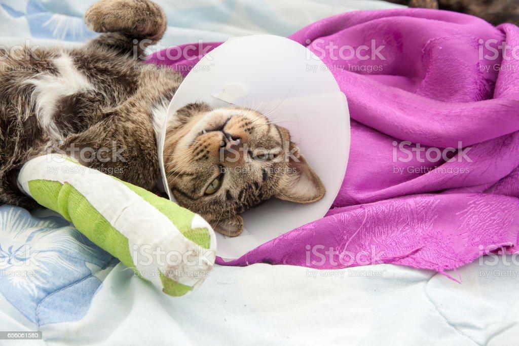 Cat leg splint stock photo