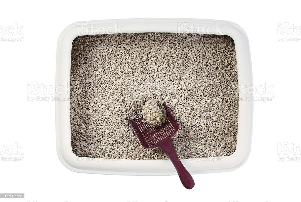 Cat litter box pictured with the scoop stock photo