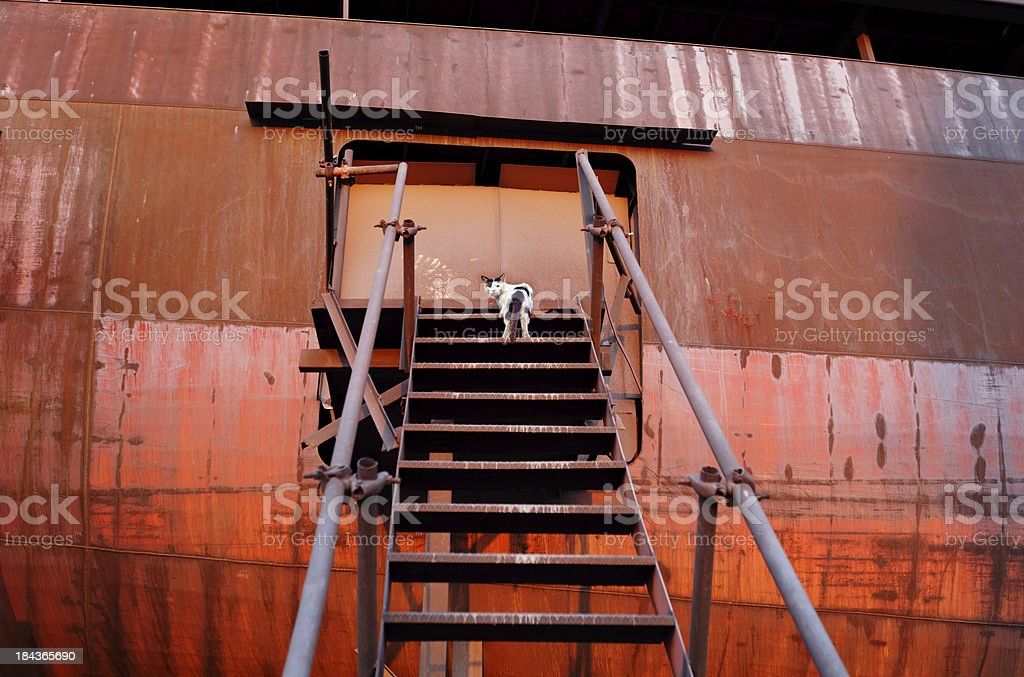 Cat living in abandoned rusty ship royalty-free stock photo