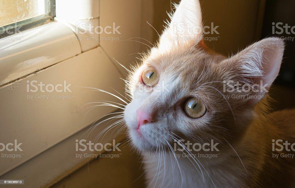 Cat look stock photo