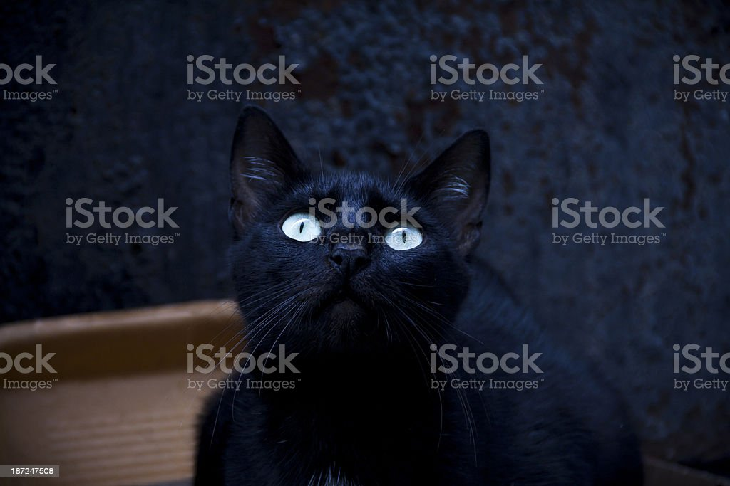 cat looking at view royalty-free stock photo