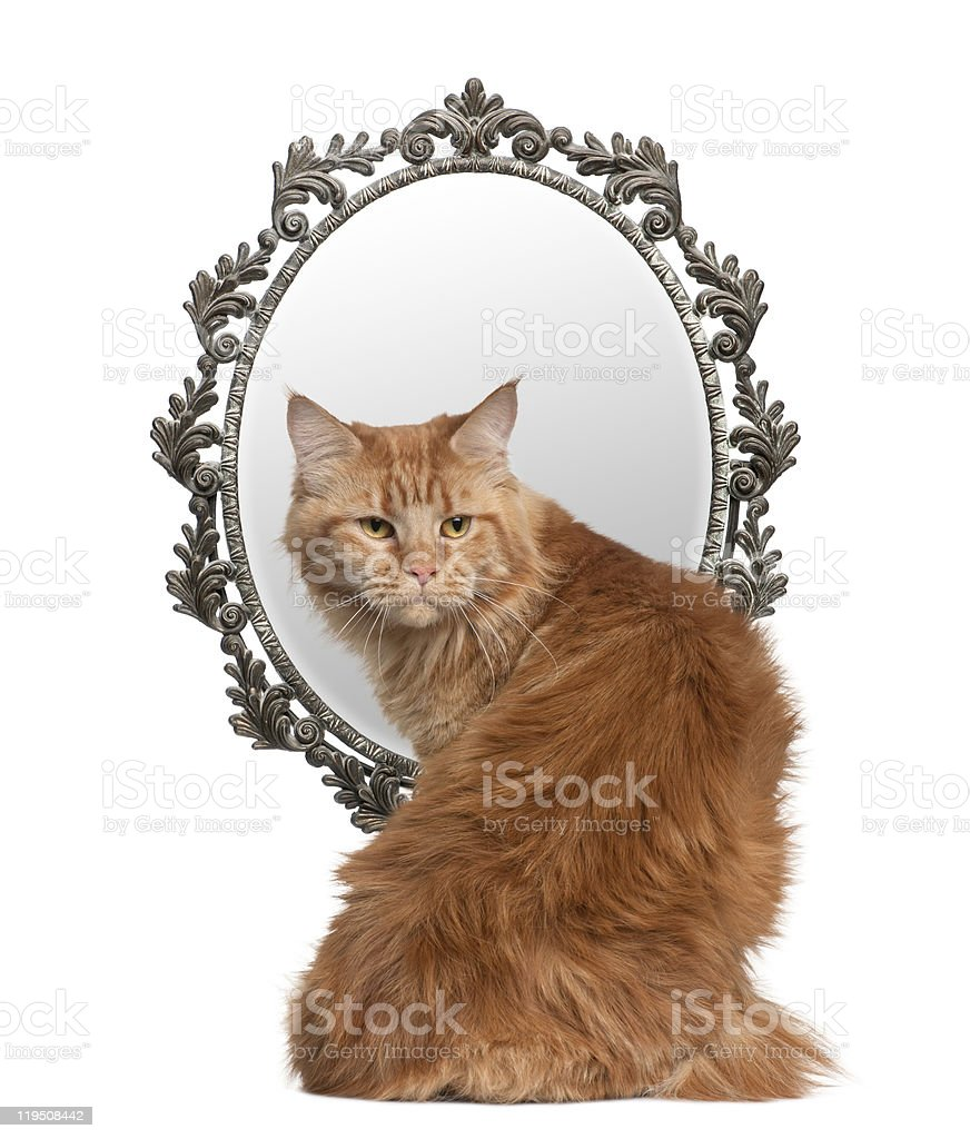 Cat looking back with a mirror in background. stock photo