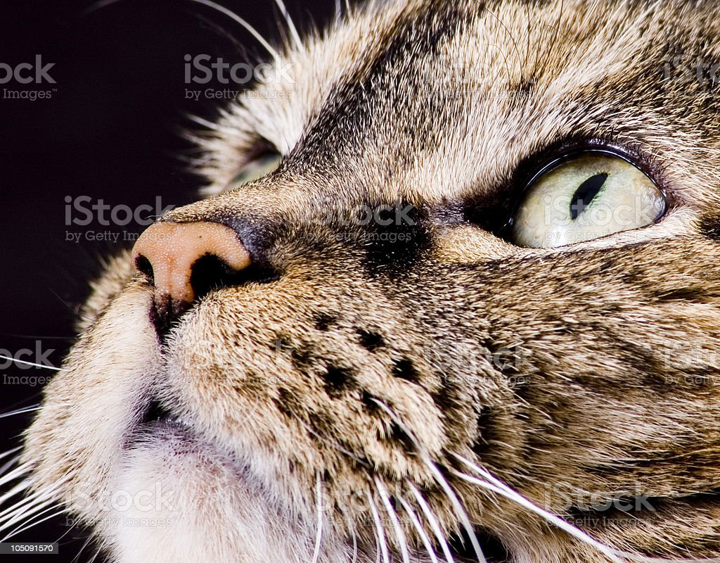 Cat, Looking off to the side royalty-free stock photo