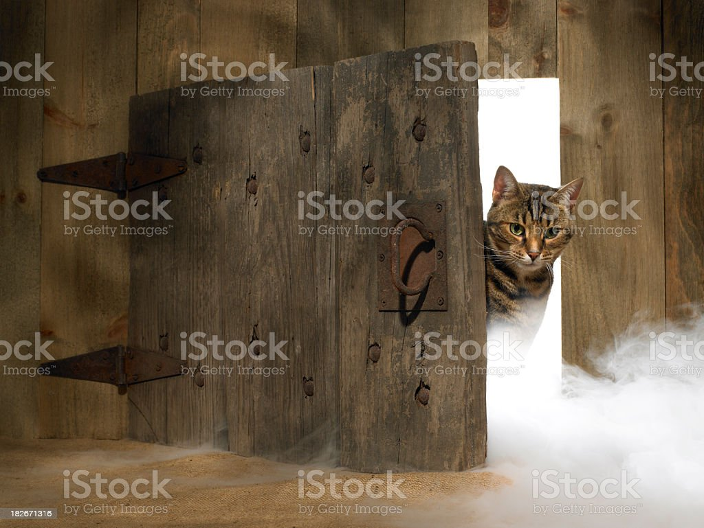 Cat looking out a Doorway with fog stock photo