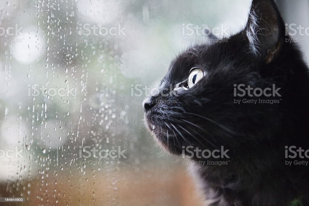 Cat looking out a window stock photo