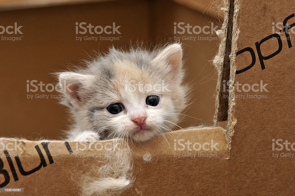 cat looking out of a box stock photo