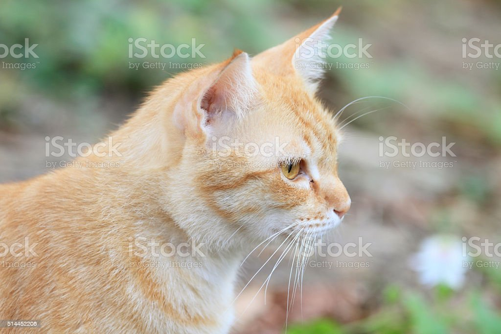 cat looking out stock photo