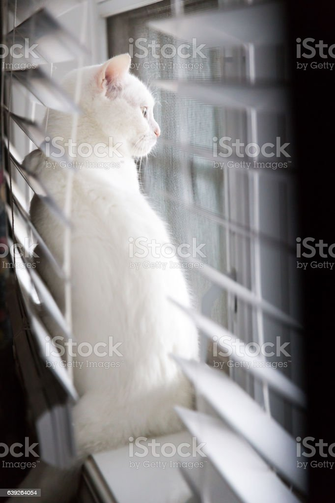 Cat Looking Out the Window stock photo