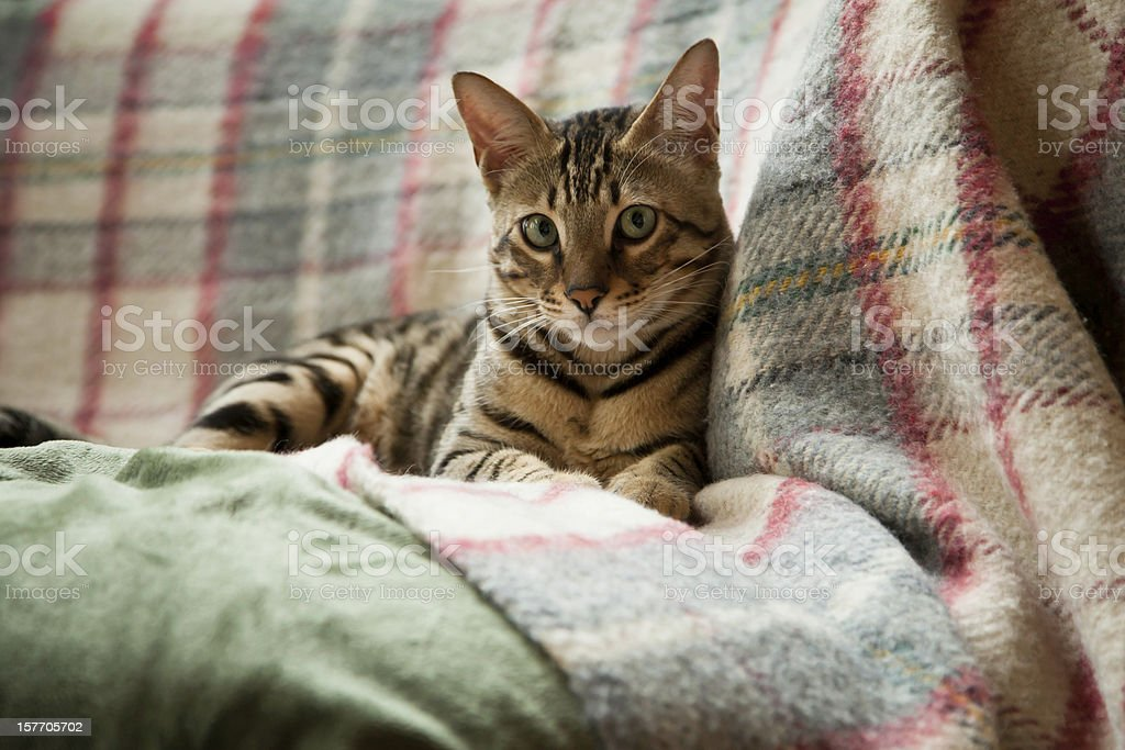 Cat looking serious stock photo