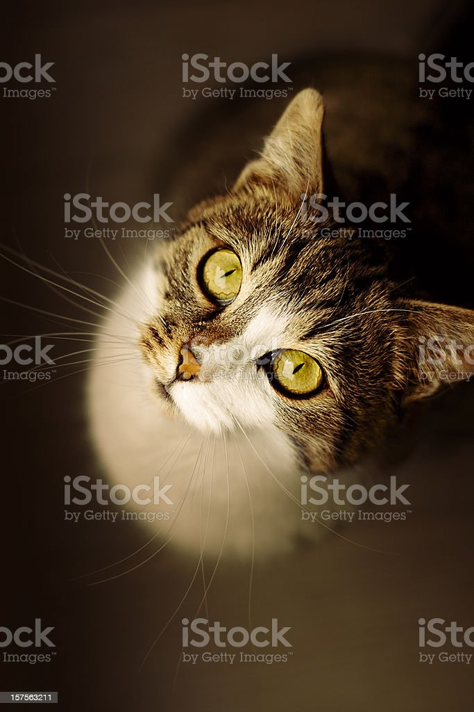 cat looking up royalty-free stock photo