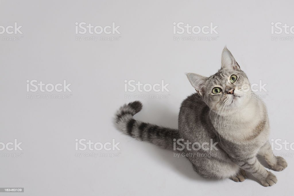 Cat looking up stock photo