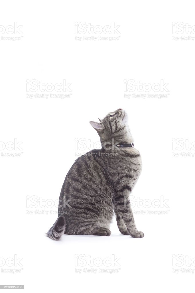 Cat looking up, profile. stock photo