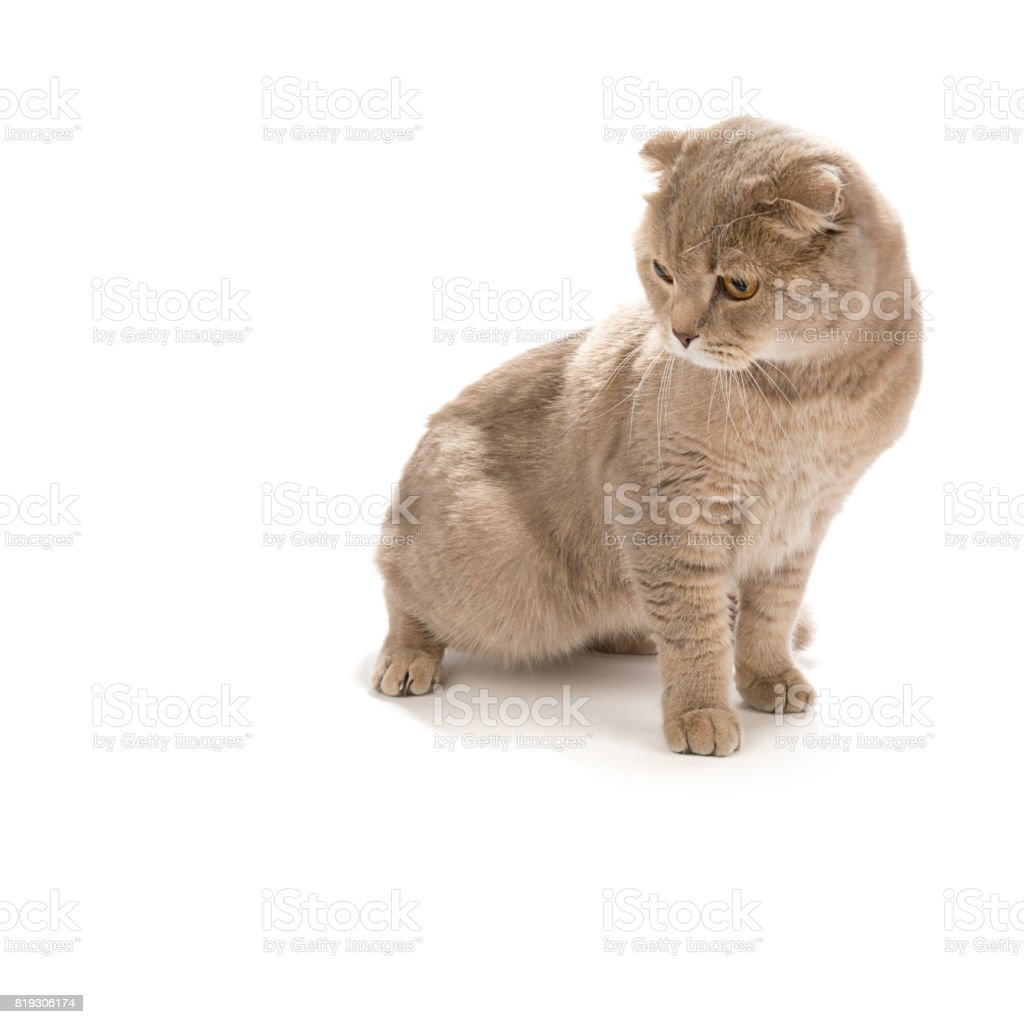 Cat Looks at the Space for Your Text stock photo