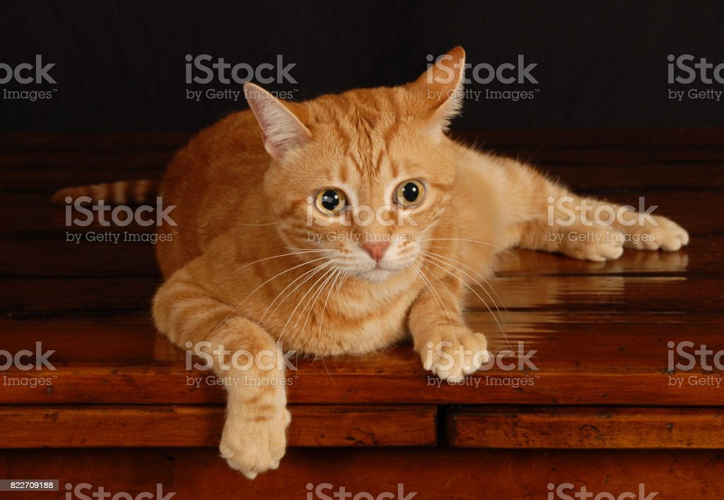 Cat Lounging stock photo