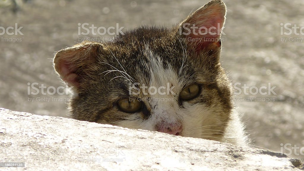 Cat lurking food on the terrace royalty-free stock photo