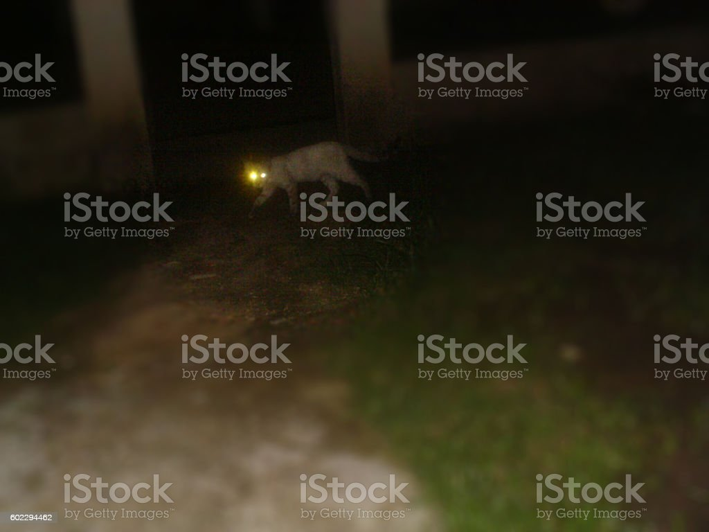 gato al acecho stock photo