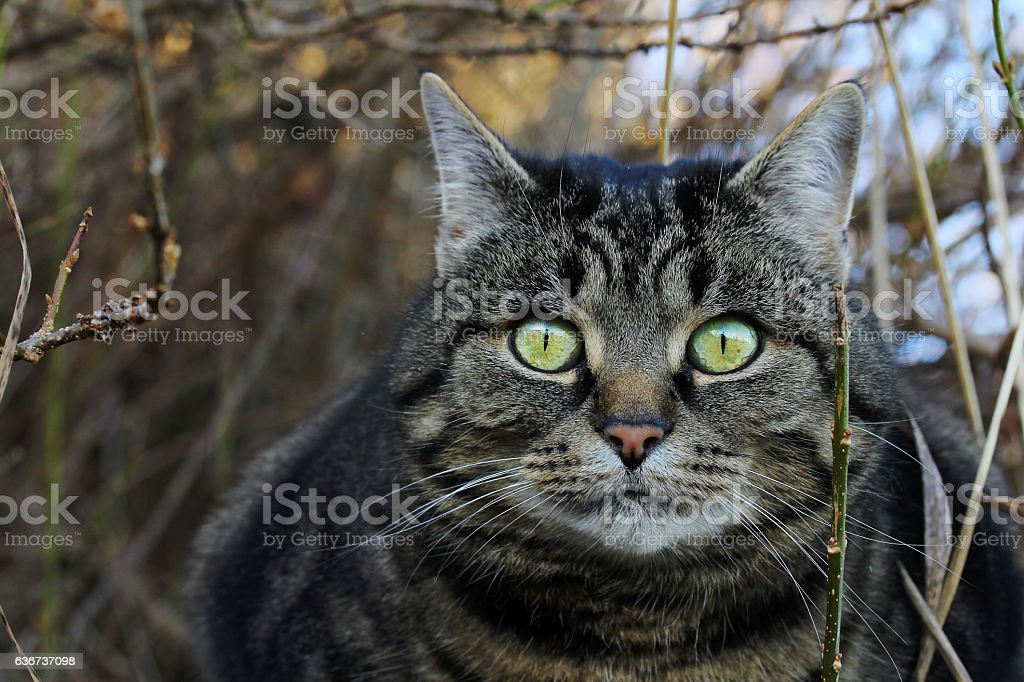 cat lurks well camouflaged in her hiding place stock photo