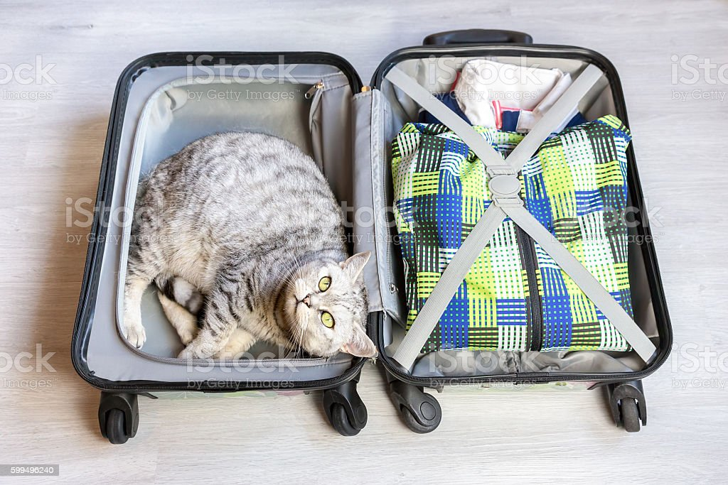 Cat lying in packed suitcase stock photo