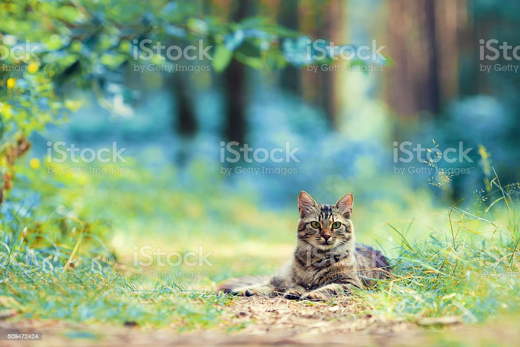 Cat lying in the forest stock photo