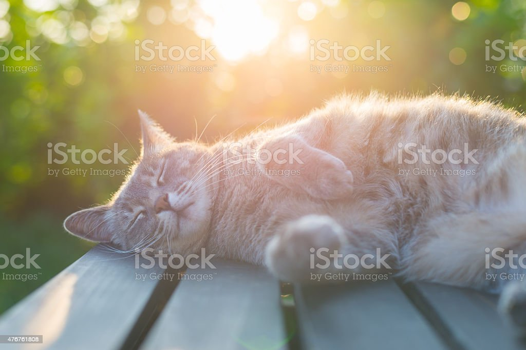 Cat lying on bench in backlight at sunset stock photo
