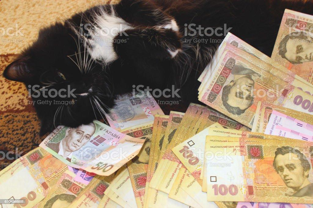 cat lying on the carpet with Ukrainian money stock photo