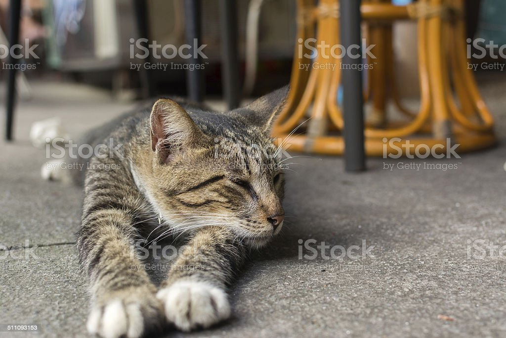 Cat lying to rest. stock photo