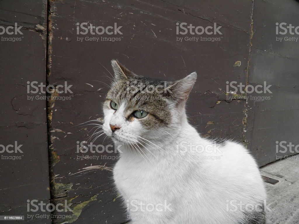 Cat mammal stock photo