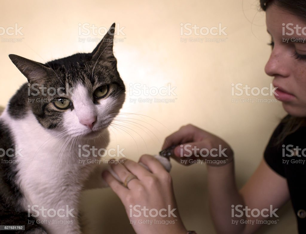 Cat Manicure. The cat gives up. Just for love stock photo
