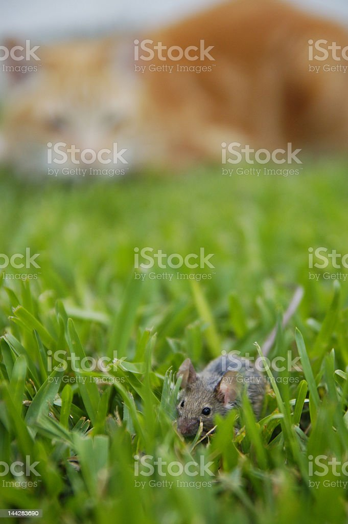 Cat & Mouse stock photo