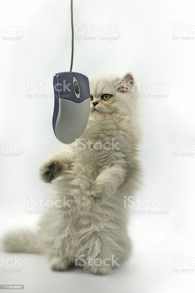 Cat n mouse game stock photo