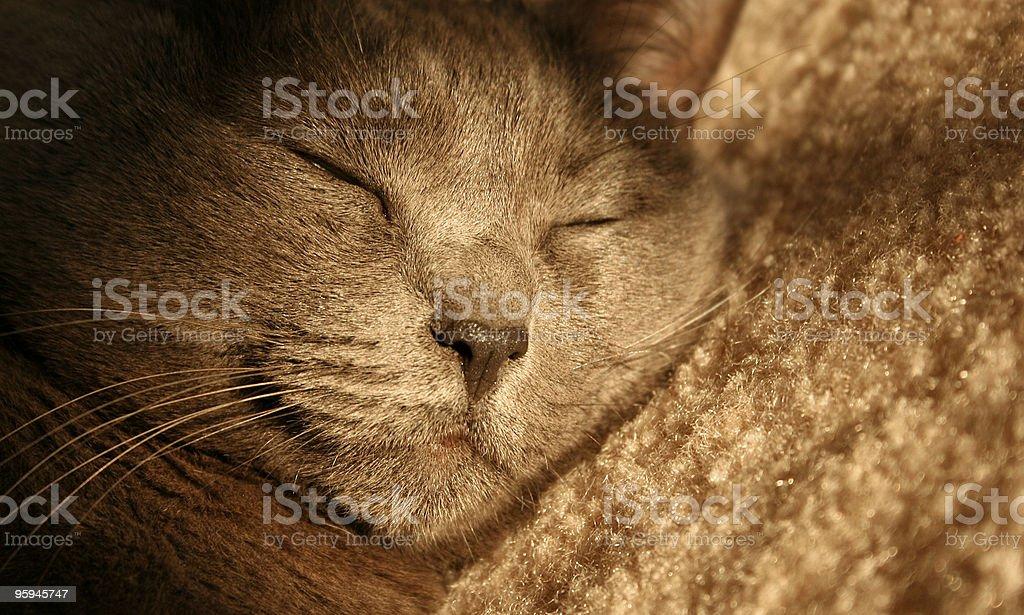 Petite sieste photo libre de droits