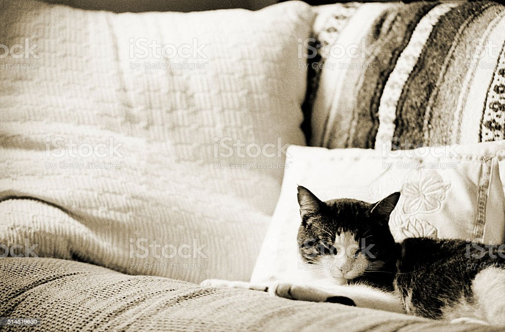 Cat Napping stock photo