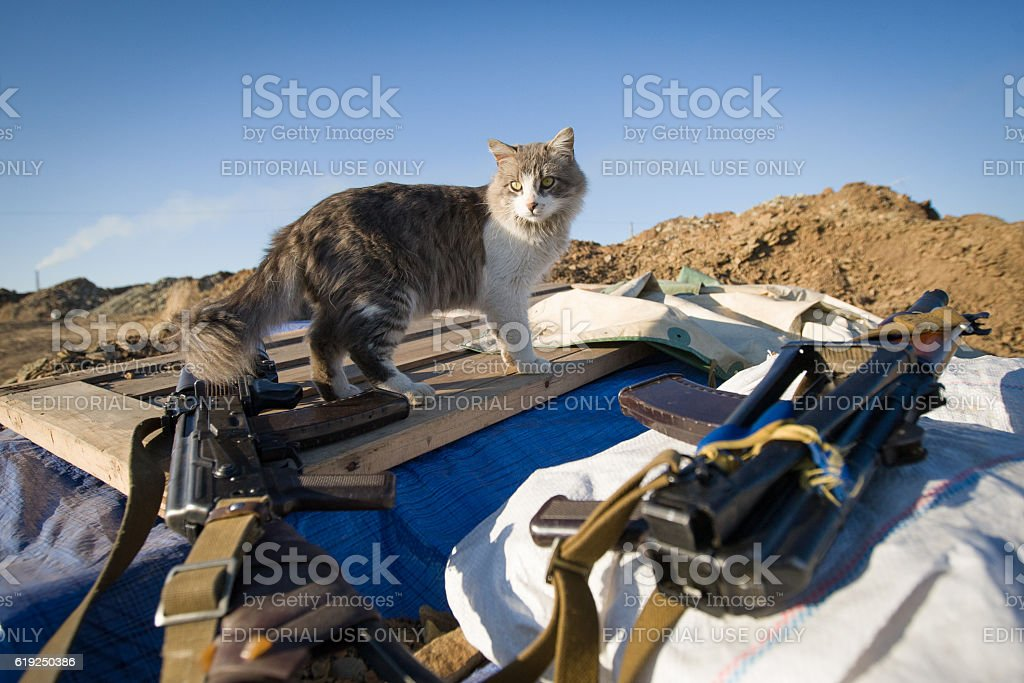 Cat near a Kalashnikov stock photo