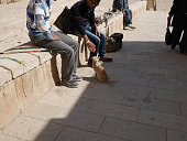 cat near Khufu's Pyramid