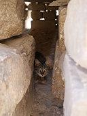 cat near Mastaba, next to Khufu's Pyramid and sphinx