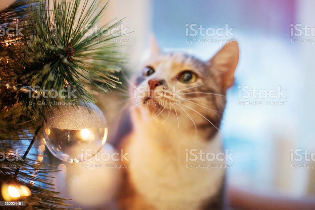 Cat near the Christmas tree with lights and toys stock photo