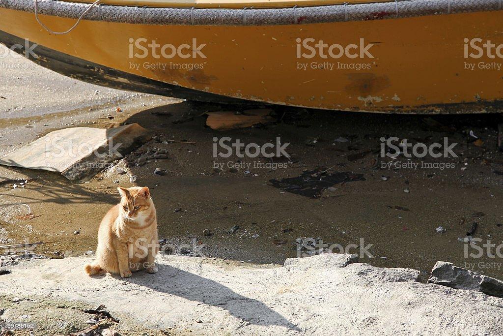 Gato junto a un barco foto de stock libre de derechos