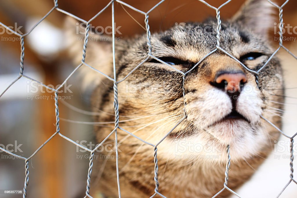 Cat nose in a fence stock photo