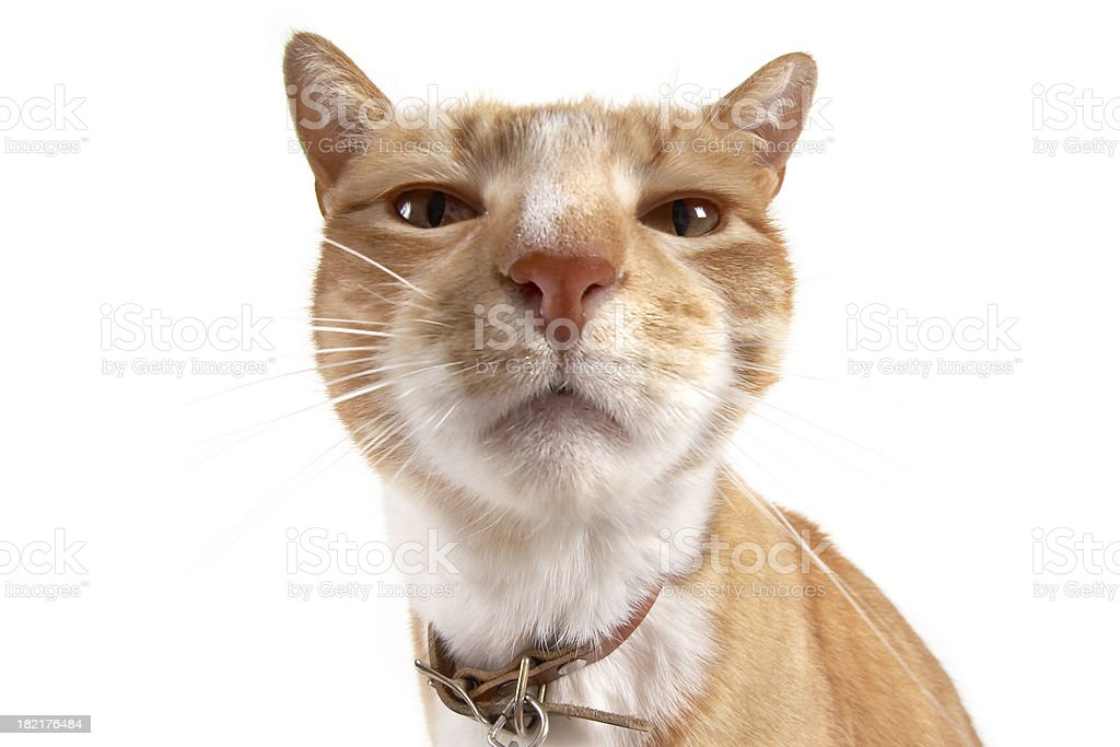 Cat nose up close royalty-free stock photo