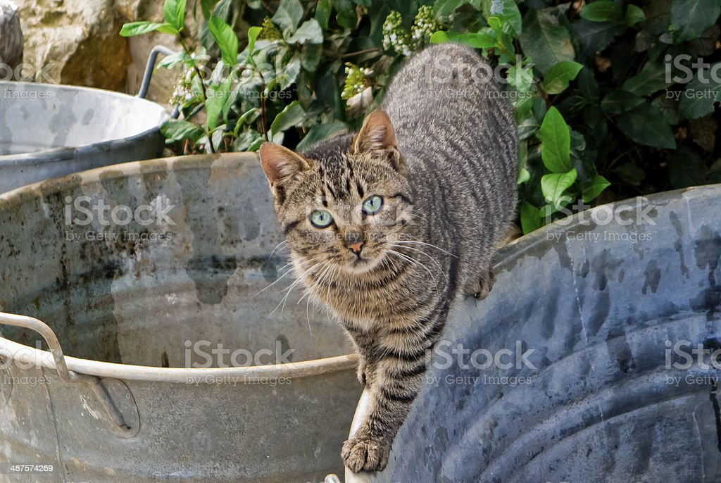 Cat of country. stock photo