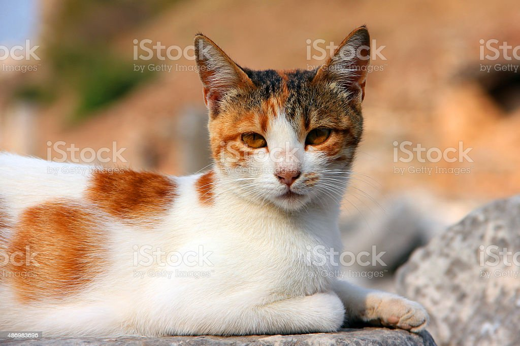 Cat of Ephesus stock photo