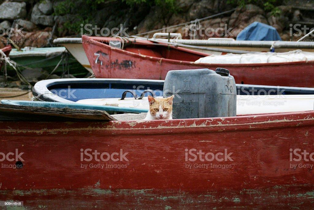 Gato en una embarcación foto de stock libre de derechos