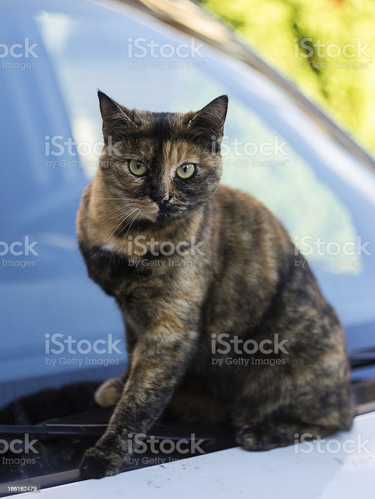 Cat on a car royalty-free stock photo