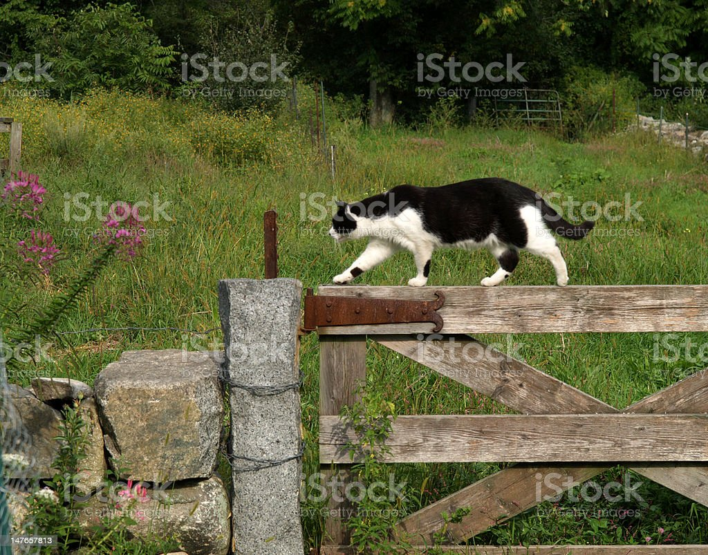 Cat on a Fence stock photo