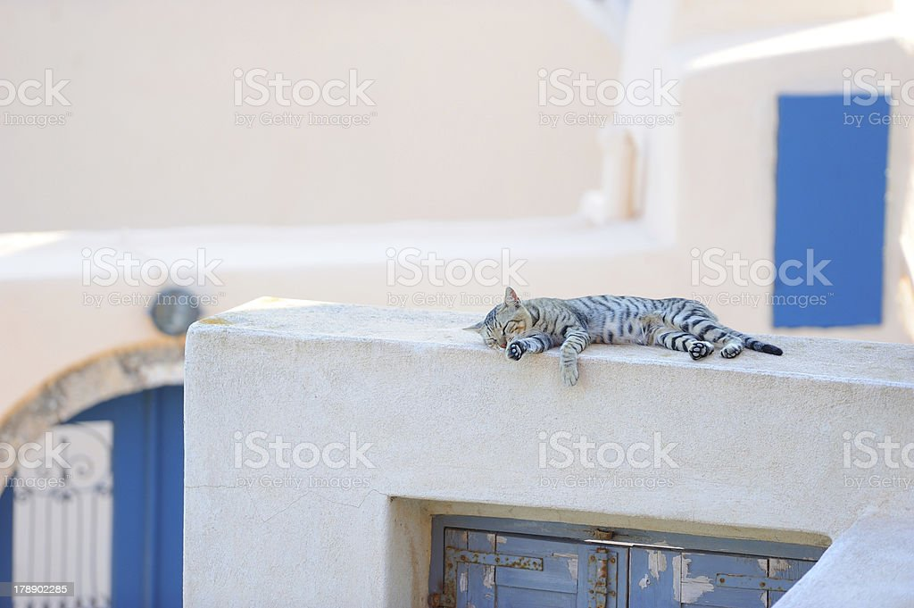Cat on a Greek island Santorini royalty-free stock photo