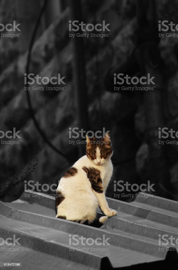 Cat on a Hot Tin Roof stock photo
