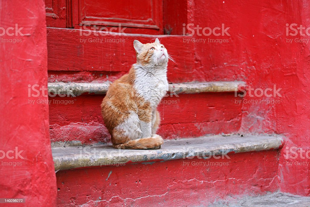 Cat on a red porch royalty-free stock photo